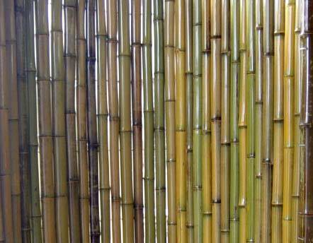 natural green bamboo fence