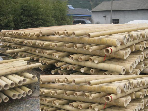 Bamboo Pole Suppliers ~ Bamboo poles china canes